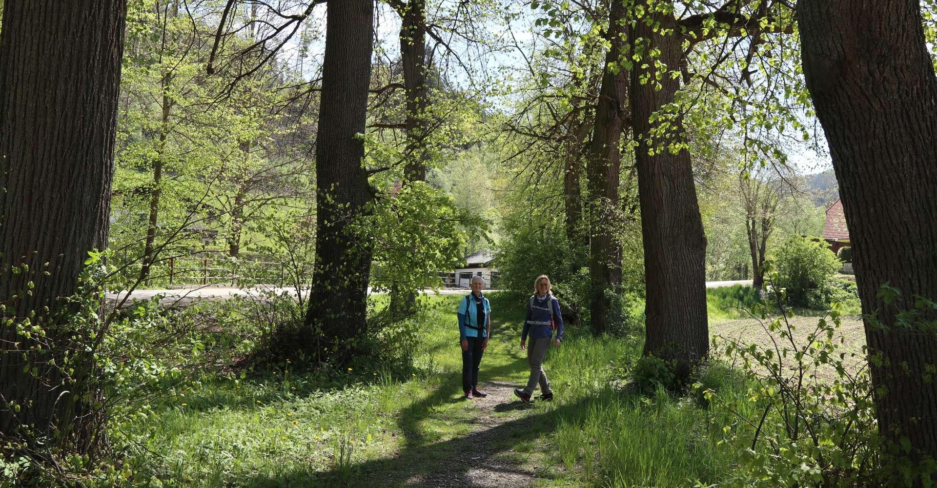<p>Lobmingtal wandert</p> Copyright:WEGES OG
